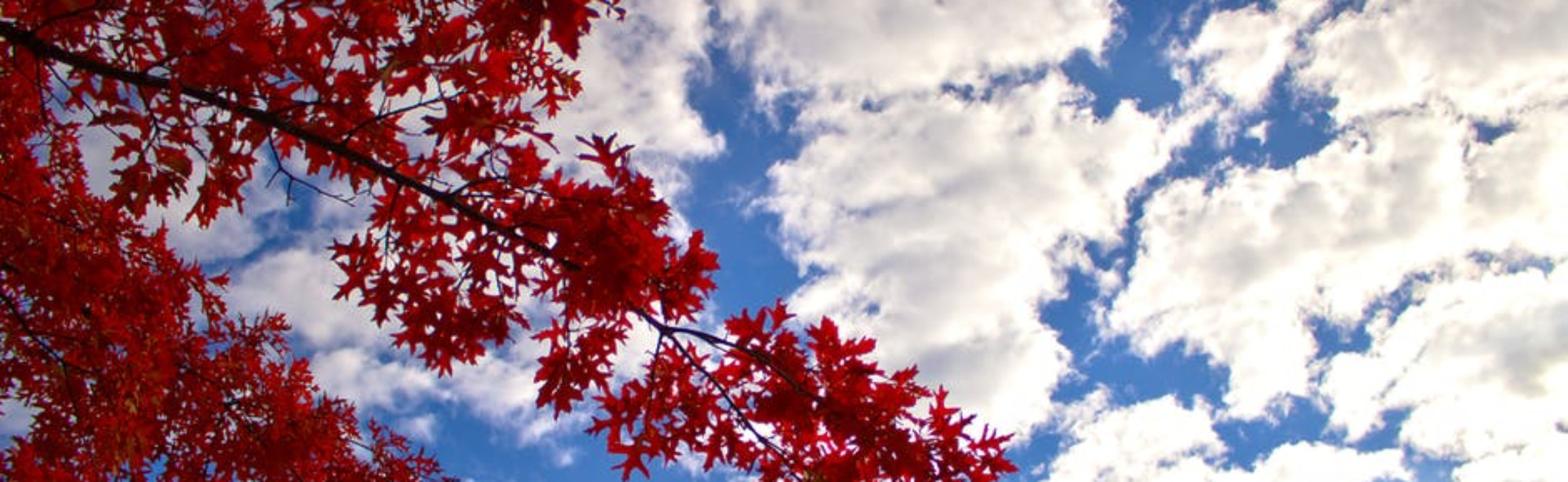 Sky with red leaves